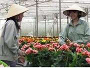 Le Vietnam, un grand exportateur de fleurs d'Asie, selon Nikkei