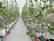 Cuba et Ho Chi Minh-Ville partagent des expériences de développement agricole