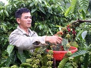 Baisse des exportations de produits agricoles, sylvicoles et aquatiques