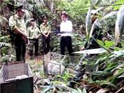 Quang Binh : un trafic d'animaux sauvages démantelé