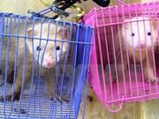 Animaux sauvages : sauvetage de quatre animaux sauvages à Tay Ninh