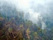 Fumées âcres : la Thaïlande travaille avec l'Indonésie