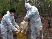 Lai Chau : découverte de deux foyers de grippe aviaire A/H5N6