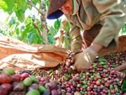 Baisse des exportations de produits agro-sylvicoles et aquatiques en dix mois