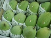 Les mangues vietnamiennes appréciées au Japon