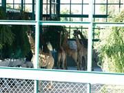 Installation de 200 animaux rares au Vinpearl Safari Phu Quoc