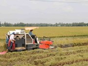 Le Venezuela ratifie des accords de coopération dans l'agriculture avec le Vietnam