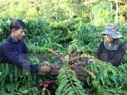 Les produits agricoles peuvent réaliser leur objectif d'exportation