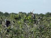 Le parc naturel de Prek Toal est devenu le 4e site Ramsar du Cambodge
