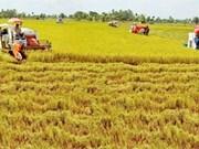 Agriculture : de nombreux privilèges pour encourager les investisseurs étrangers