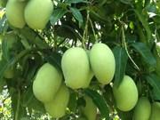 Les exportations de mangues au Japon promises à un bel avenir