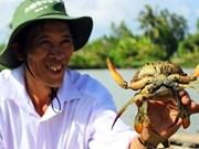 Le crabe de Nam Can de Cà Mau devient une marque commerciale
