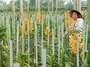 Découverte de huit nouvelles espèces d'orchidée au Tay Nguyen