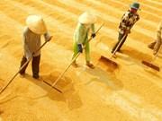 La production de riz estimée à 45,2 millions de tonnes