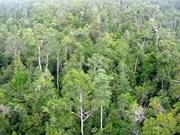 Le Vietnam s'engage dans la gestion durable des forêts