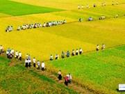 An Giang entend accélérer ses exportations de riz