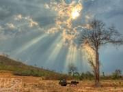 Tay Nguyen : plus de 20.800 hectares de cultures touchées par la sécheresse