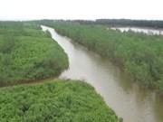 Aide sud-coréenne pour le développement des mangroves à Thai Binh