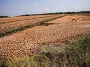Le delta du Mékong submergé dans la lutte contre la sécheresse