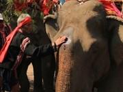 Cérémonie de prière pour la santé des éléphants des ethnies du Tây Nguyên
