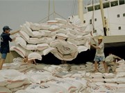 Les exportations de riz atteindront 1,6 million de tonnes au 2e trimestre