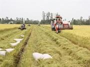 Des entraves pour les exportations de riz