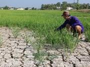 Sécheresse et salinisation : dégâts de près de 6.400 milliards de dongs