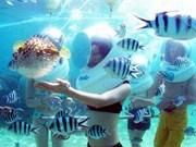 À la découverte des fonds marins de Cu Lao Chàm en casque-scaphandre
