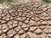 Le Japon aide le Vietnam à surmonter la sécheresse et la salinisation