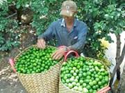 Exportation de citrons en République de Corée