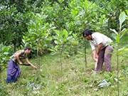 Des acacias pour reverdir les terres dégradées