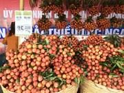 Les litchis Luc Ngan de Bac Giang ont leur Semaine à Hanoi