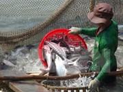 Les exportations de pangasius rapportent 616 millions de dollars en six mois