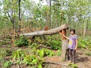 Près de 400 millions de dollars pour les forêts du Tay Nguyen