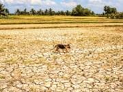 Bloomberg: L'économie vietnamienne enregistre une croissance appréciable malgré la sécheresse