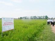 "Des champs ""exemplaires"" à Quang Binh"