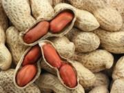 Le Vietnam suspend les importations d'arachide du Sénégal