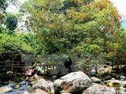 48 animaux rares libérés dans le parc national Phong Nha-Ke Bang