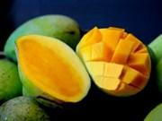 Les mangues de Yên Châu sont désormais protégées