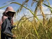 Le Cambodge construira de nouveaux entrepôts de riz