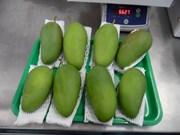 Les premières mangues fraîches du Vietnam vendues en Australie