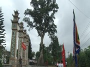 Deux arbres centenaires de la province de Thua Thien-Hue reconnus arbres patrimoniaux