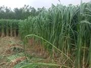 Pour la durabilité de la culture de la canne à sucre