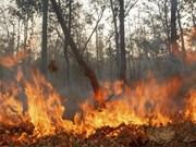 La BM et le Danemark aide l'Indonésie dans la gestion forestière