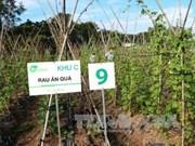 Agriculture high-tech : Tay Ninh va choisir le Japon comme partenaire