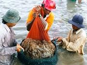 Créer un label pour les crevettes vietnamiennes