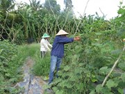 Le Vietnam doit miser sur la culture de produits bio