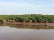 Les mangroves reculent, l'érosion côtière menace