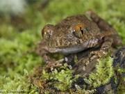 Découverte de 87 nouvelles espèces au Vietnam