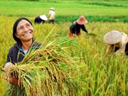 Développer la recherche sur le riz en Asie du Sud-Est